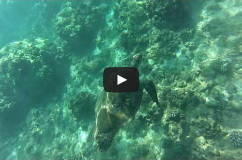 this snorkeling video in Maui is definitely not your average underwater footage.