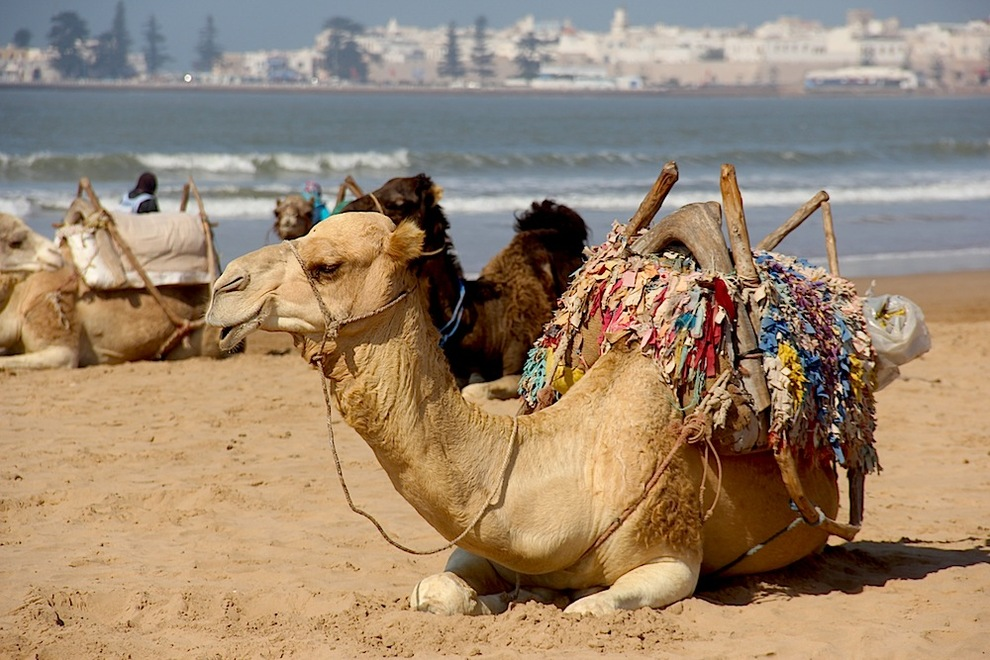 What to do in Essaouira