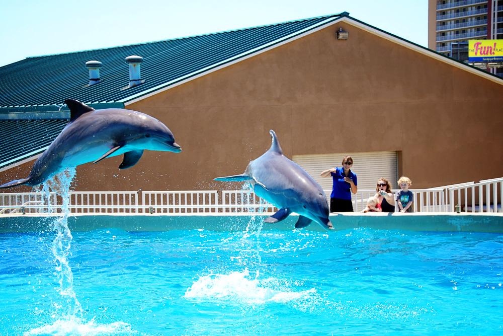 Childhood Dream Comes True At Gulf World Marine Park