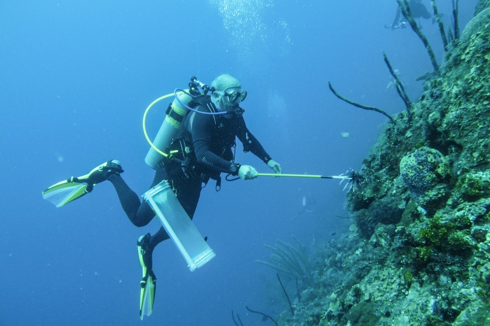 Ridding the cayman islands of lionfish one dive at a time travel mindset - Dive time tours ...