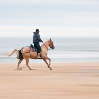 Horseback riding in Virginia Beach