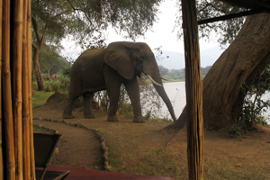 Another elephant just wandering past us, photo by Mary Mihaly
